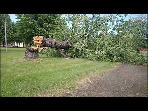 Шторм, волна, дерево сломал ветром.