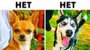 10 Пород Собак Опасных Для Семей с Детьми