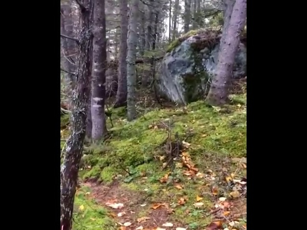 The ground looks like it's breathing in Quebec Forest