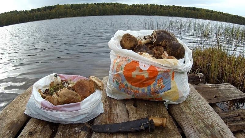 Рыбалка с ночёвкой осенью,удачный сбор грибов и отдых 18) Часть -2
