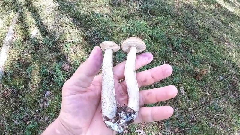 ГРИБЫ. Правда о грибах (рассказывает Максим Лютый)
