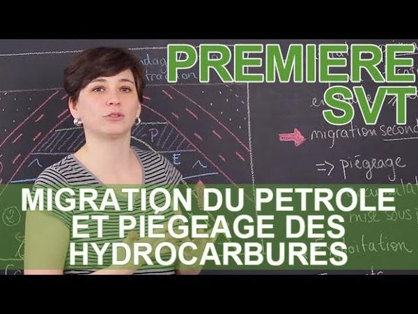 Migration du pétrole et piégeage des hydrocarbures - SVT - 1ère - Les Bons Profs