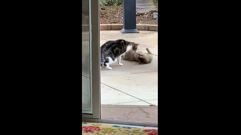 My cat hanging out with the feral cat I've been trying to tame