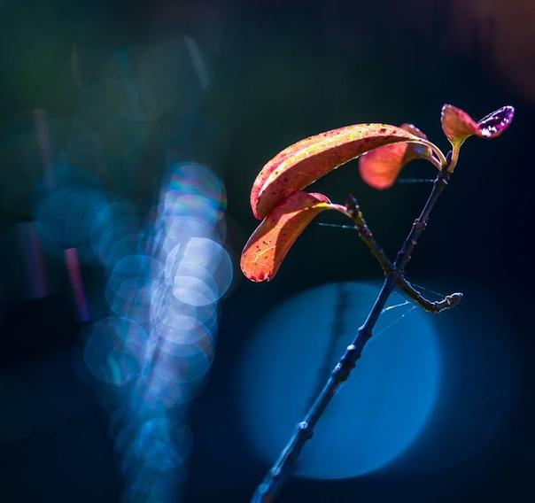 «Краски природы» Ясуо Хирано (Yasuo Hirano) фотограф из Японии. Он любит природу, поэтому именно она и является его моделью. Получаются очень живые и яркие