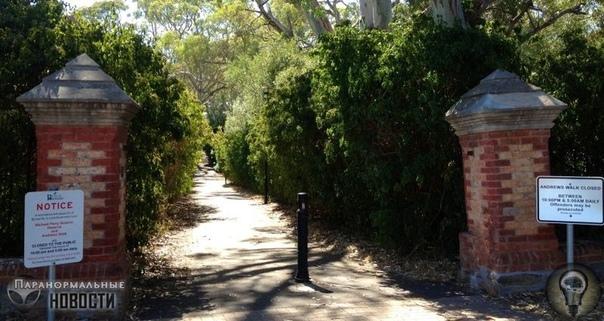 Доктор-садист, сбитая поездом девушка и кровожадный пес: Городские легенды Австралии В Австралии тоже есть свои местные городские легенды и люди из других стран, как правило, никогда о них не