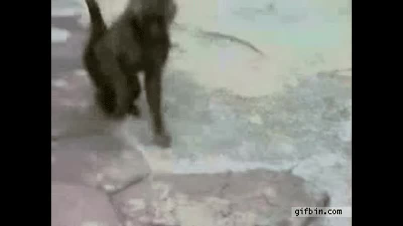 Monkey scared of own reflection