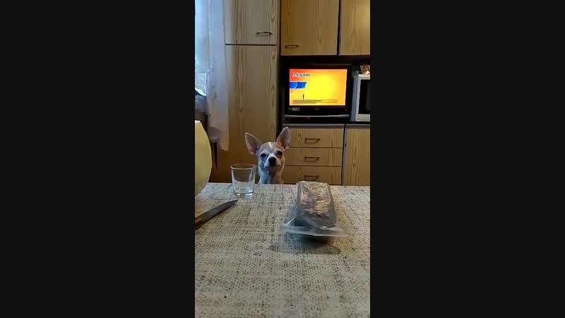 Собакин