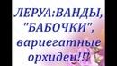 НОВЫЕ ОРХИДЕИ в ЛЕРУАВанды,Бабочки,вариегатные06.03.2019,Самара,ТЦ Космопорт
