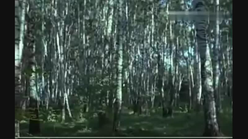 Галина Ненашева Шум берёз mp4
