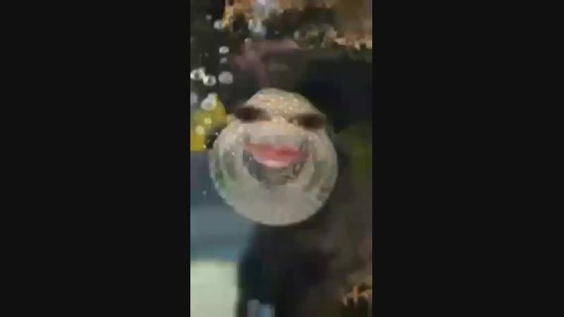 Video-2a114dbb2f84addea600030c6e39b60d-V.mp4