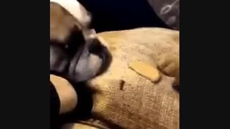 Держи друг печеньку