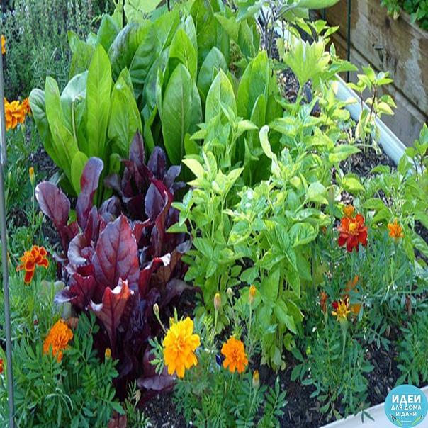Травы для овощей