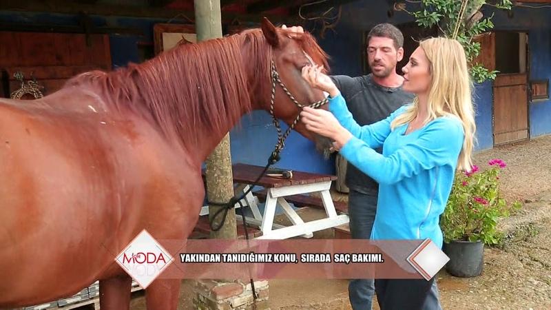 Issız Adam Cemal Hünal'ın at çiftliği görenleri büyülüyor