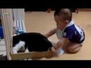 Когда детишки играются с котами!