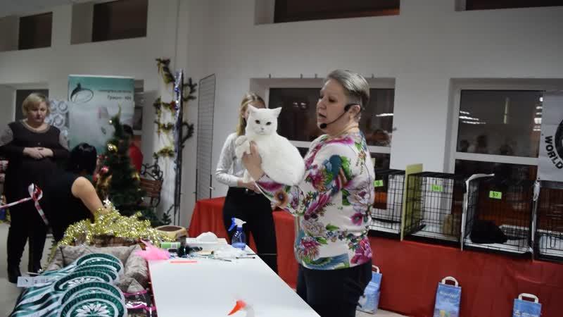 Выставка кошекРепетиция Нового года! 16.12.18 WCF - ринг взрослых