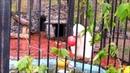 Белый медведь Ростик ( ч.1). Знакомство с подарком из Японии. 09.10.18 г.