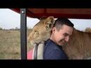 ЗАРЯЖАЕМСЯ ПОЗИТИВОМ Лола знает где спастись от львов .Конечно в машинке