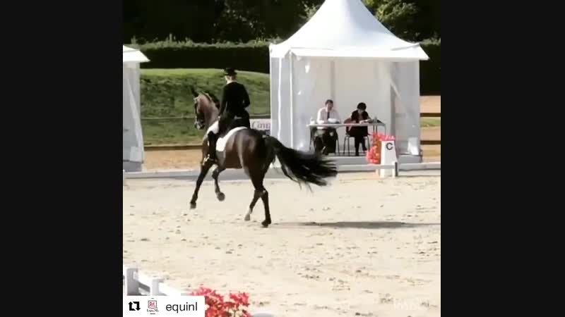 конь мячик