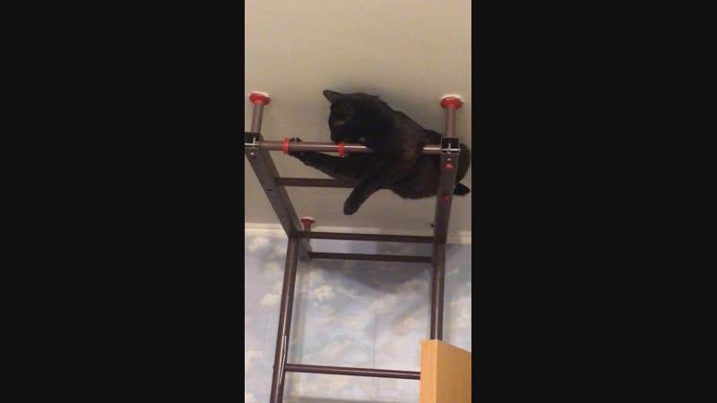 Как наш кот попадает на шкаф