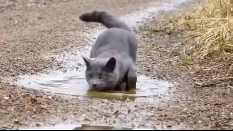 Тут где-то рыбка была!😂