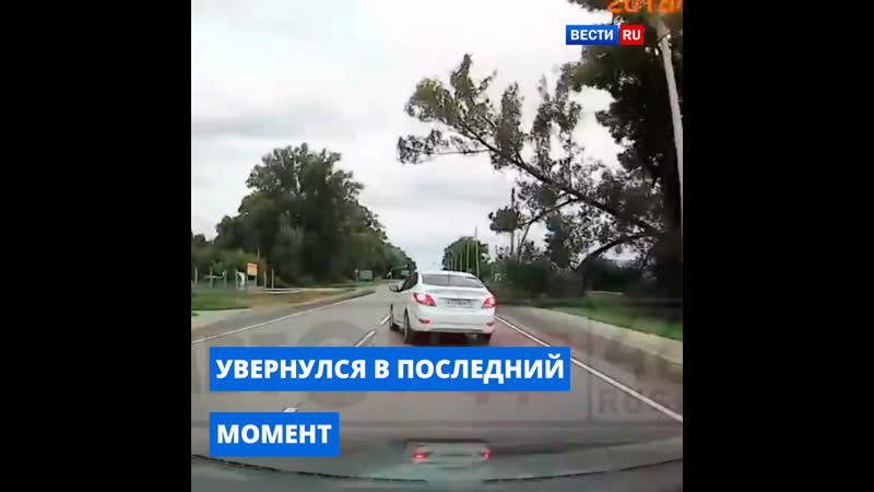 Водитель в последний момент увернулся от рухнувшего на дорогу дерева