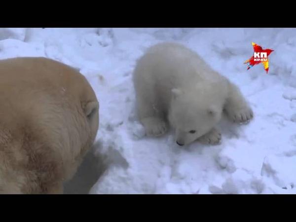 Медвежонок из новосибирского зоопарка говорит мама