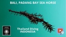 Bali in Indonesia, padang bay with sea horse, corail, fish and the club Thailand Diving Pattaya Asia