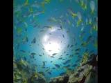 Underwater FUSION