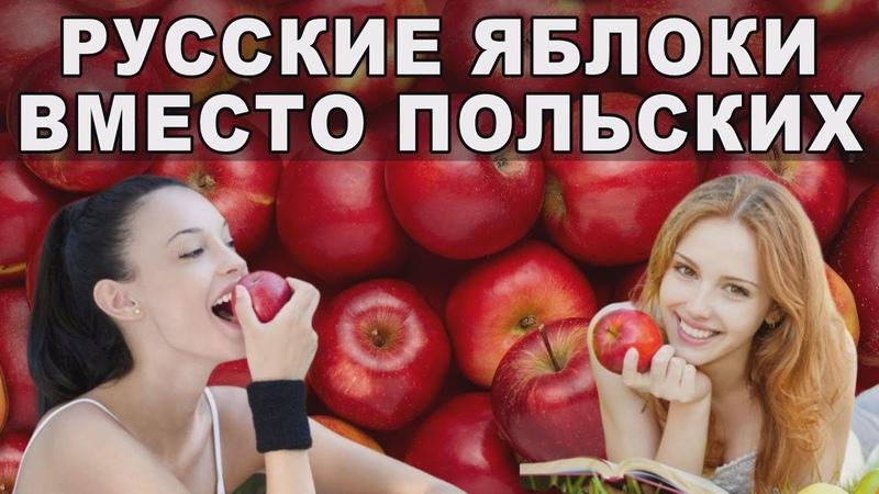 Яблоки России Мировой рынок яблок