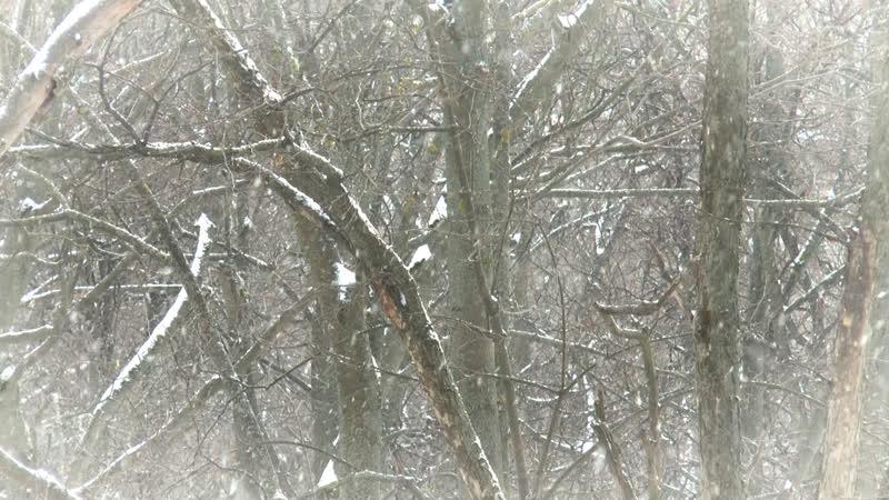 Порхает и кружится белый снег.