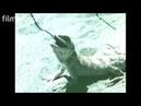 Предвестник гибели Аральского моря Каракумский канал