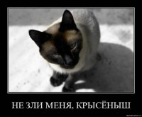 Алексей Сибиль, 3 сентября 1986, Симферополь, id80007538