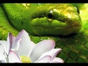 Внешние миры, внутренние миры. Часть 3. Змея и лотос