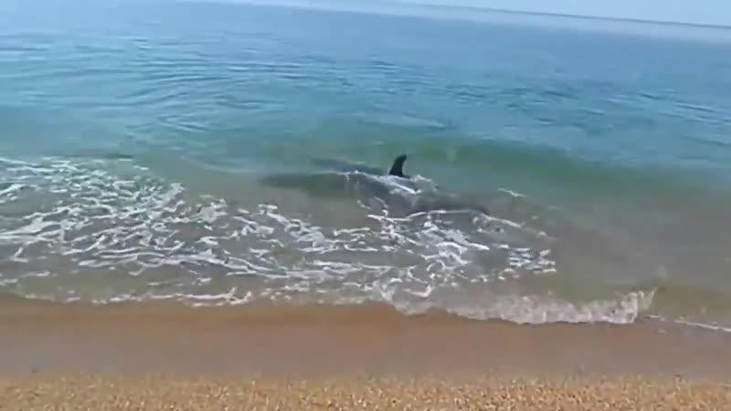 Дельфин ловит рыбку - Крым, Керчь ИнтересноеВидео позитив