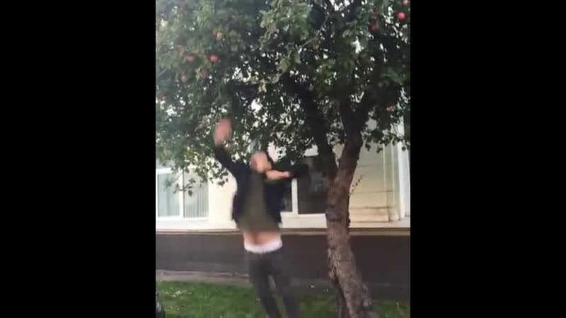 Срывает яблоко с дерева