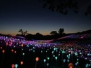 Bruce Munro: Field of Light at Sensorio