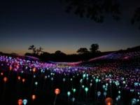 Bruce Munro Field of Light at Sensorio