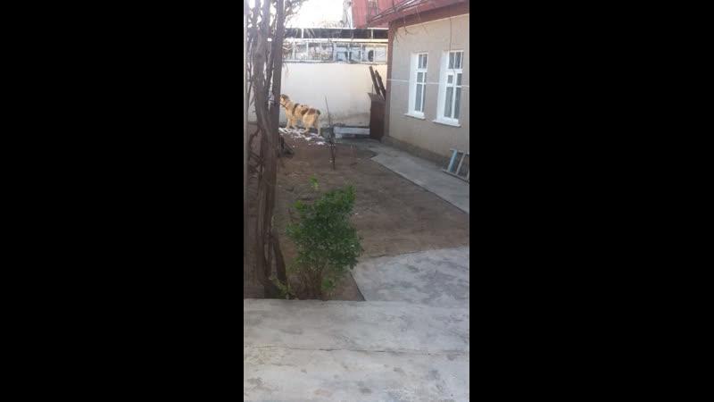 Krasavitsa