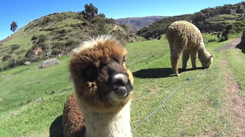 Vitkuv Cestopiss Peru Cusco