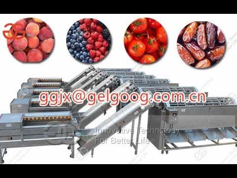 Dates Grading Machine Date Fruit Sorting Machine WhatsApp 8618537181190