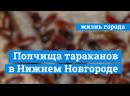Нашествие огромных тараканов в Нижнем Новгороде