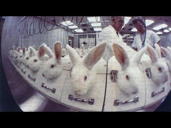 Мы не подопытные кролики! Режиссер Галина Царёва