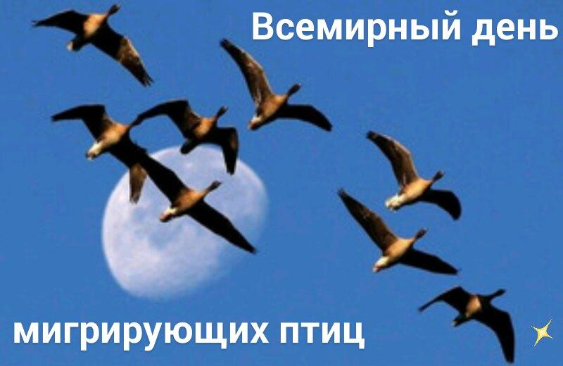 https://pp.userapi.com/c853420/v853420834/3d32a/hpdx9-scFrg.jpg