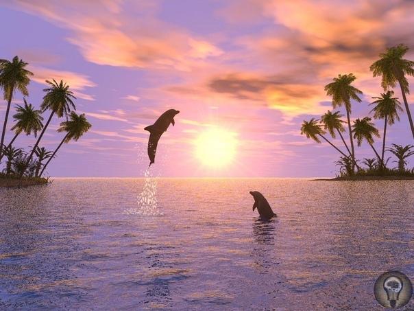 Цивилизaция дельфинoв