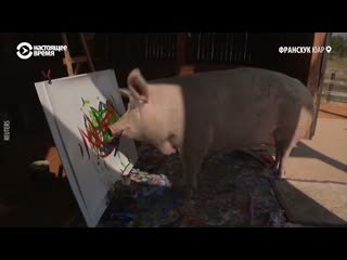 Свинья рисует картины. Их продают, отсылая деньги на благотворительность