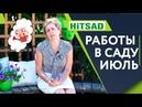 Важные работы в саду в Июле ✔️ Сад Летом с Хитсад ТВ