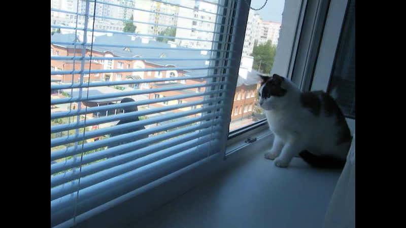 Птичка за окном