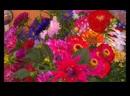 Вальс цветов П. И. Чайковский