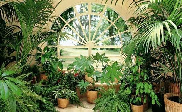 Приметы, связанные с растениями!