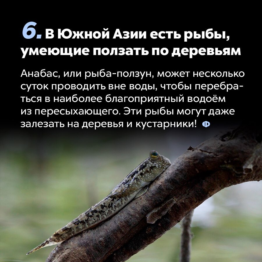 https://pp.userapi.com/c853424/v853424377/92e6d/5Yx_xdrXNSs.jpg